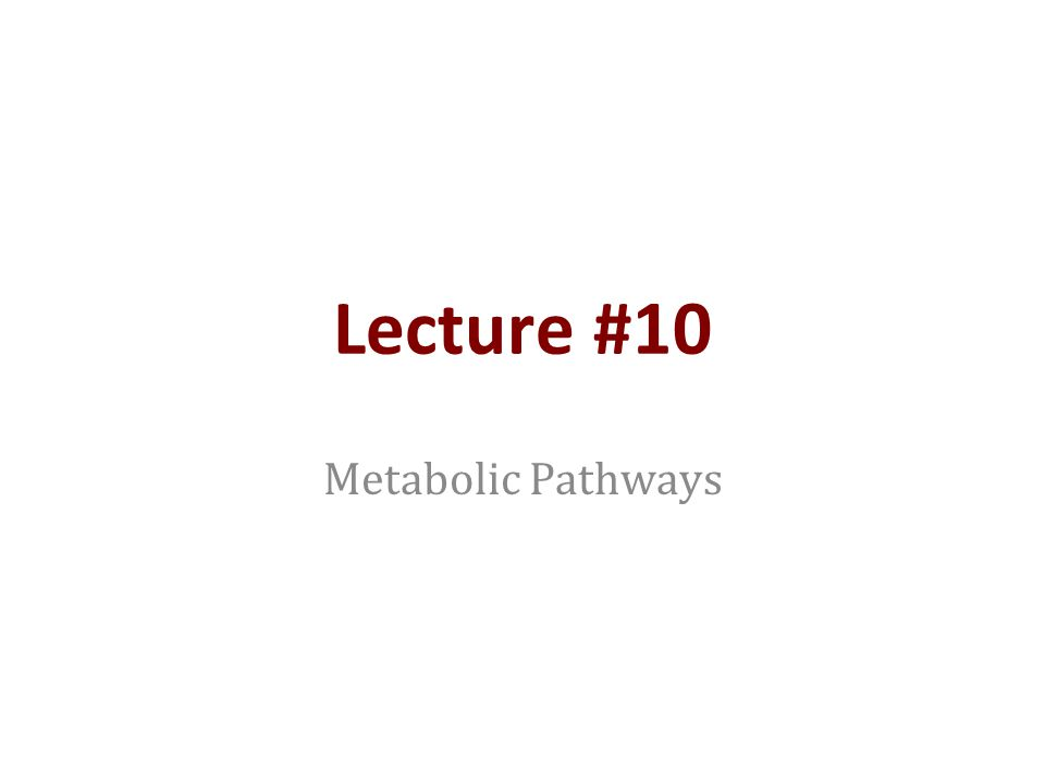 Lecture #10 Metabolic Pathways