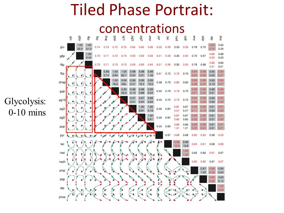 Glycolysis: 0-10 mins Tiled Phase Portrait: concentrations