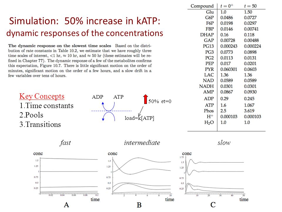Simulation: 50% increase in kATP: dynamic responses of the concentrations fastintermediateslow ADPATP load=k[ATP] 50% et=0 Key Concepts 1.Time constan