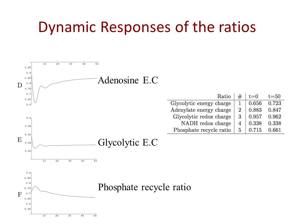 Dynamic Responses of the ratios Adenosine E.C Glycolytic E.C Phosphate recycle ratio