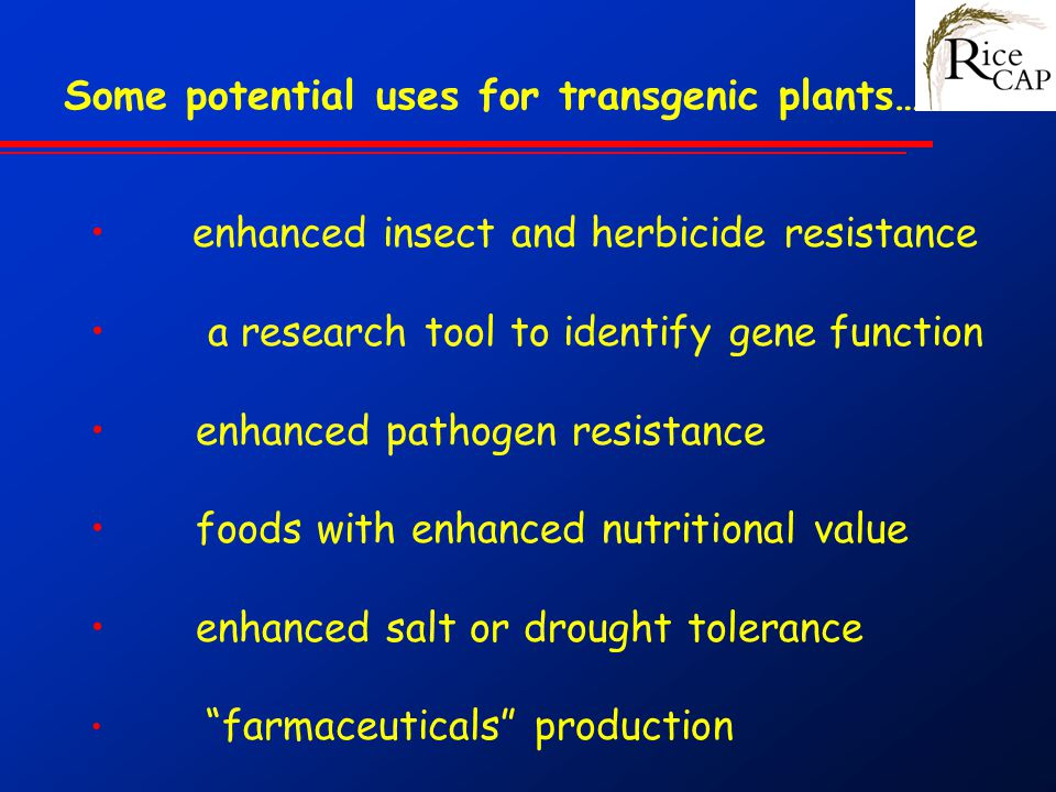 Some potential uses for transgenic plants…….