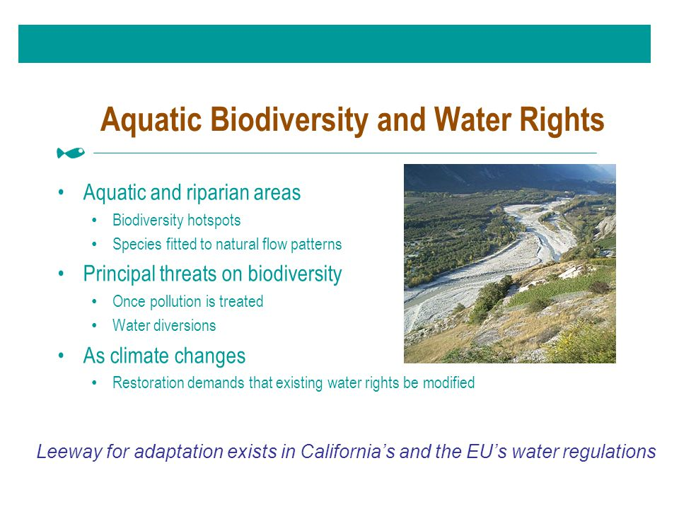 Aquatic Biodiversity and Water Rights Aquatic and riparian areas Biodiversity hotspots Species fitted to natural flow patterns Principal threats on biodiversity Once pollution is treated Water diversions As climate changes Restoration demands that existing water rights be modified Leeway for adaptation exists in California's and the EU's water regulations