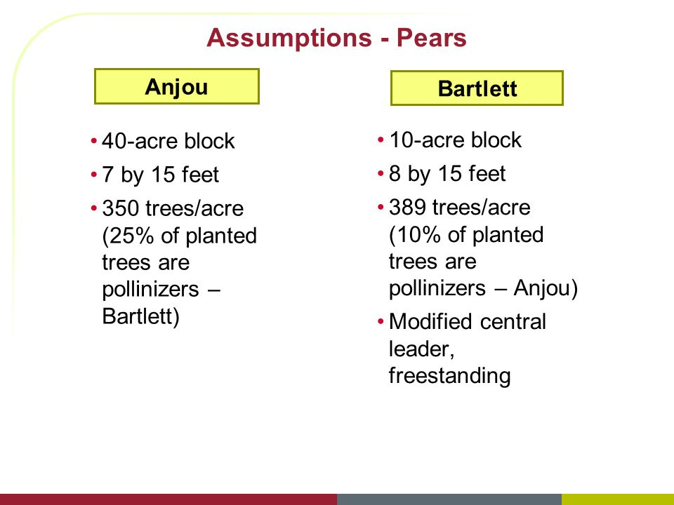 Assumptions - Pears Anjou 40-acre block 7 by 15 feet 350 trees/acre (25% of planted trees are pollinizers – Bartlett) Bartlett 10-acre block 8 by 15 feet 389 trees/acre (10% of planted trees are pollinizers – Anjou) Modified central leader, freestanding