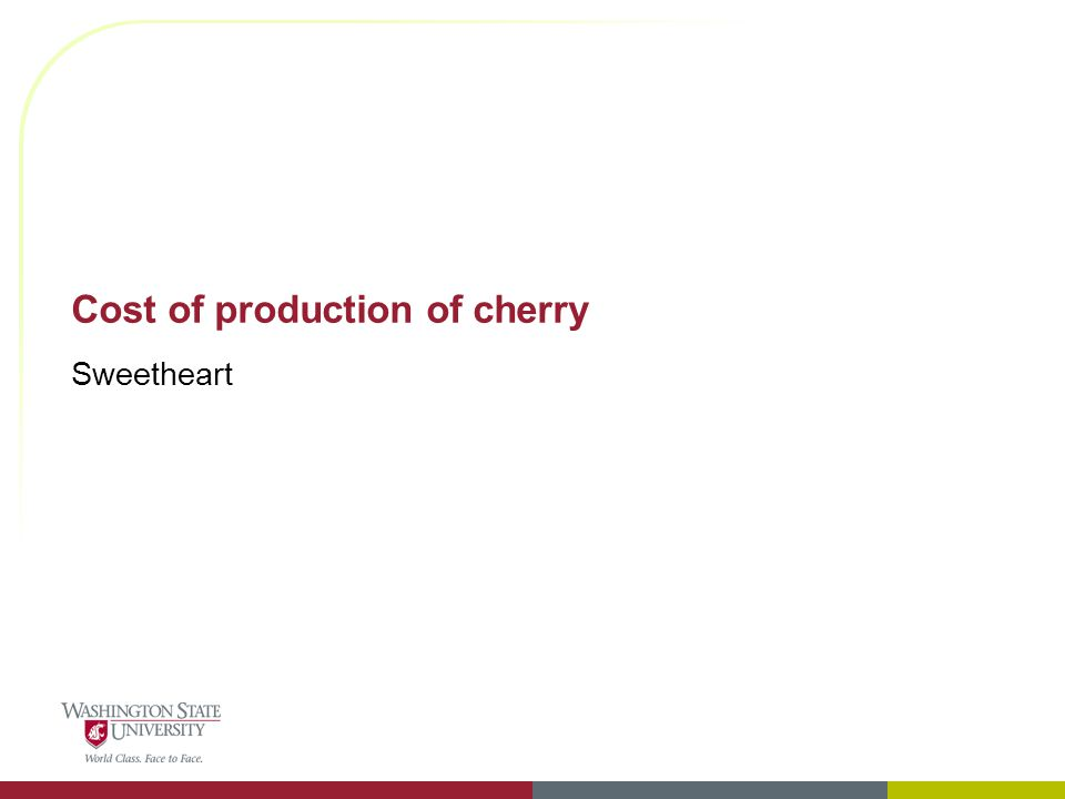 Cost of production of cherry Sweetheart