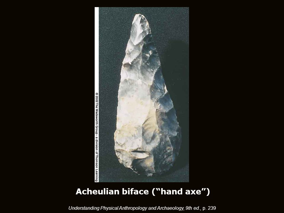 Acheulian biface ( hand axe ) Understanding Physical Anthropology and Archaeology, 9th ed., p. 239