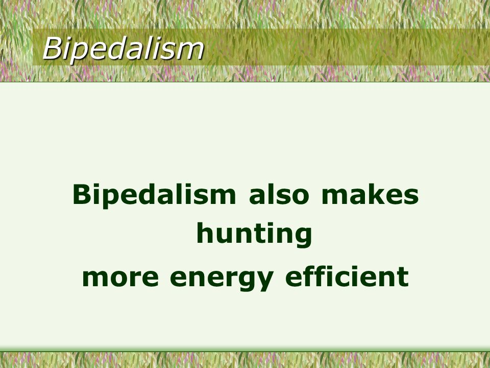 Bipedalism Bipedalism also makes hunting more energy efficient