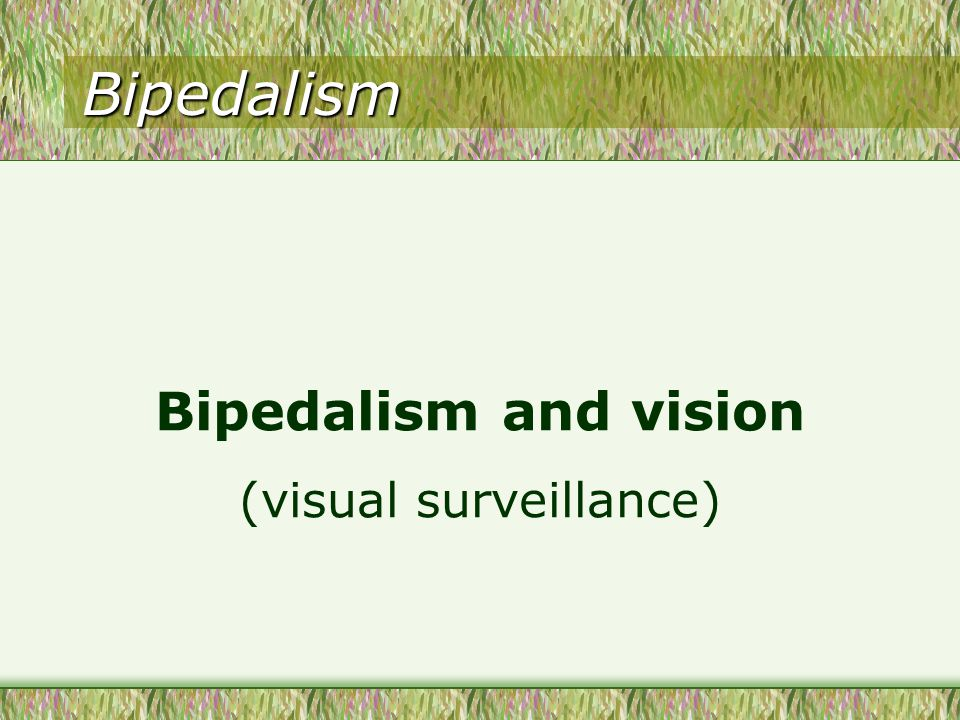 Bipedalism Bipedalism and vision (visual surveillance)