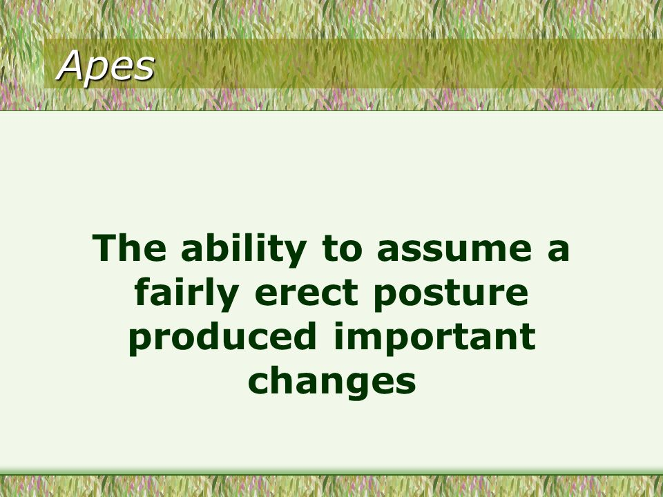 Apes The ability to assume a fairly erect posture produced important changes