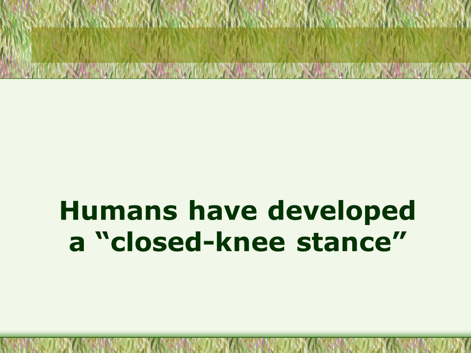 Humans have developed a closed-knee stance