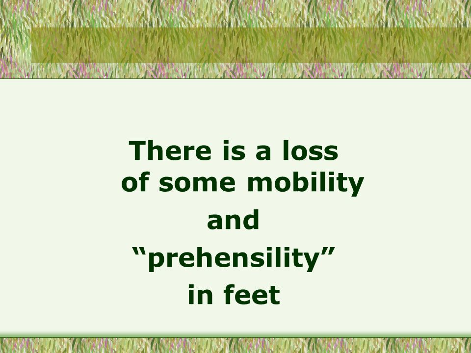 There is a loss of some mobility and prehensility in feet
