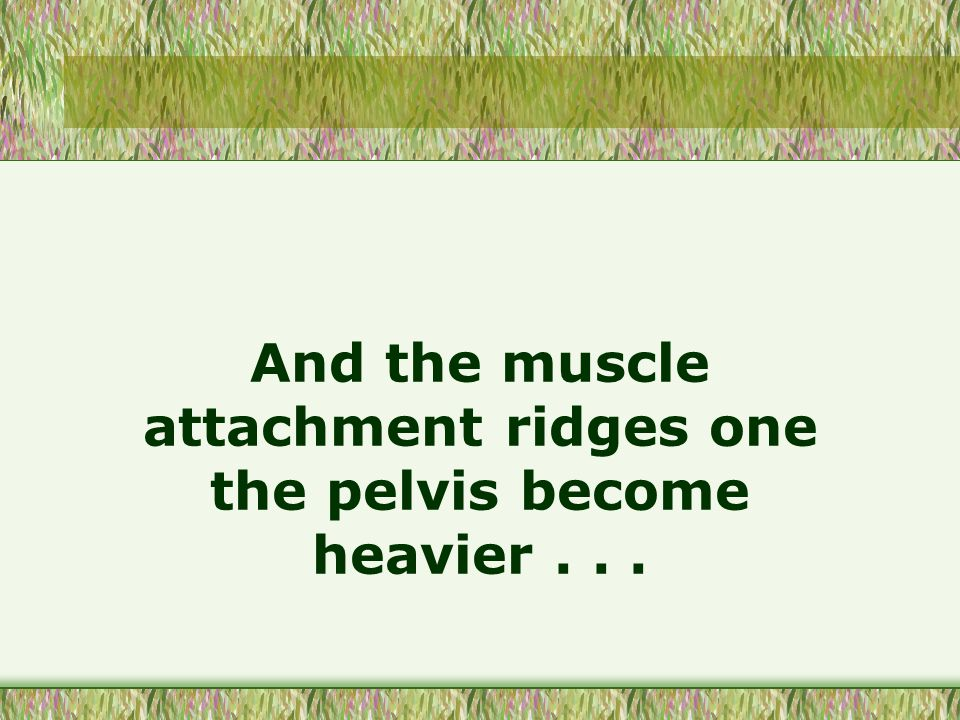 And the muscle attachment ridges one the pelvis become heavier...