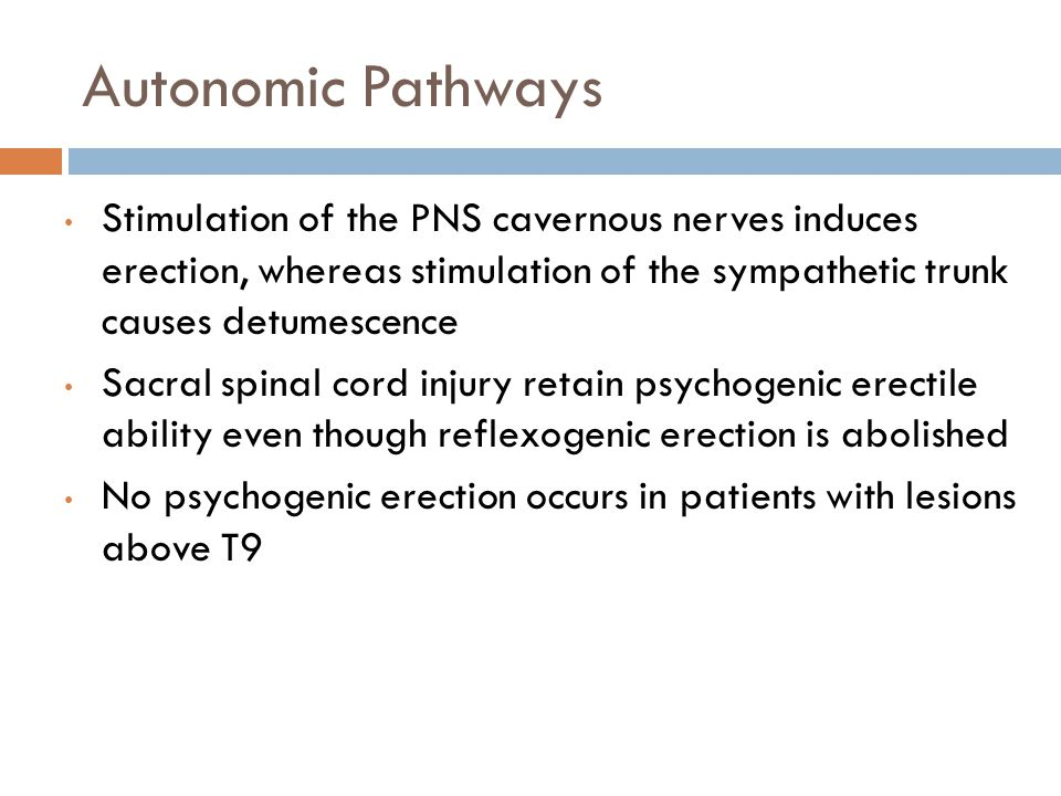 Autonomic Pathways Stimulation of the PNS cavernous nerves induces erection, whereas stimulation of the sympathetic trunk causes detumescence Sacral s