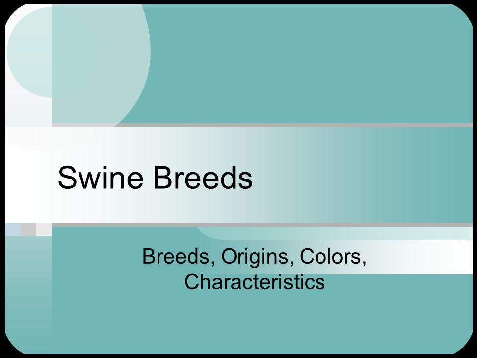 Major Swine Breeds Duroc Hampshire Yorkshire Chester White Poland China Spot Tamworth Landrace Berkshire Hereford