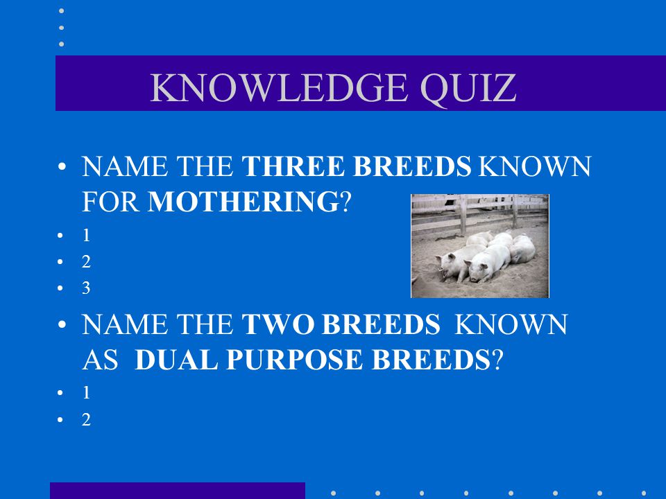KNOWLEDGE QUIZ Name the nine most popular breeds in the United States? 1 2 3 4 5 6 7 8 9