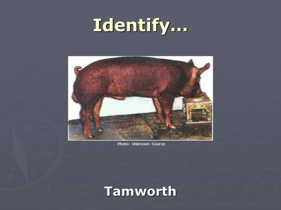 Identify… Tamworth Photo: Unknown Source