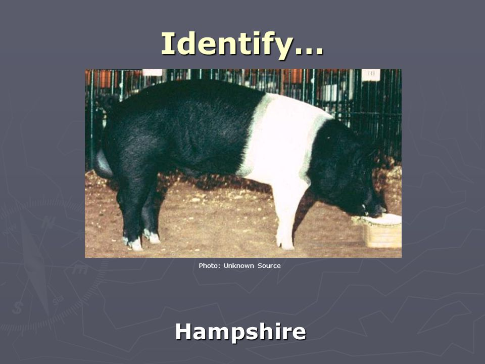 Identify… Hampshire Photo: Unknown Source
