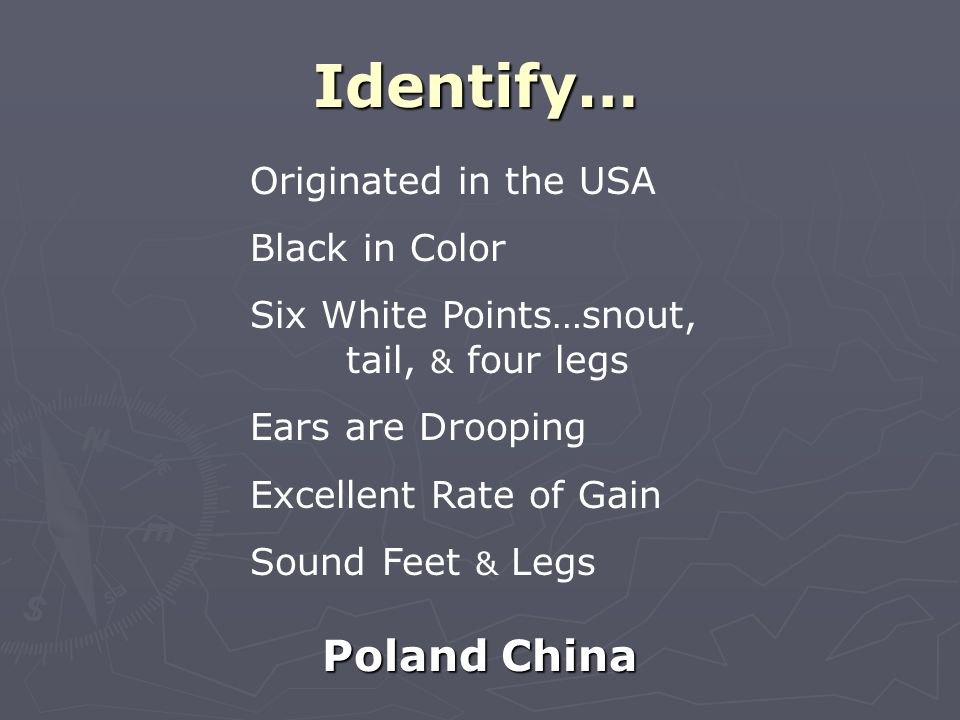 Identify… Poland China Originated in the USA Black in Color Six White Points…snout, tail, & four legs Ears are Drooping Excellent Rate of Gain Sound Feet & Legs