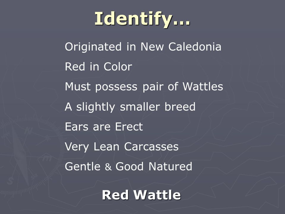 Identify… Red Wattle Originated in New Caledonia Red in Color Must possess pair of Wattles A slightly smaller breed Ears are Erect Very Lean Carcasses Gentle & Good Natured