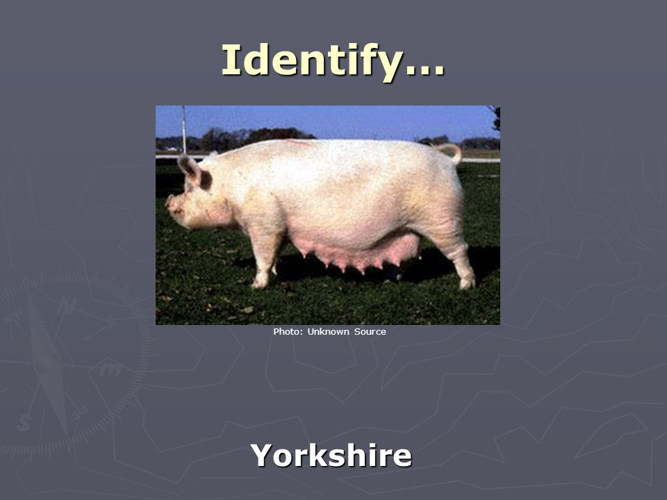 Identify… Yorkshire