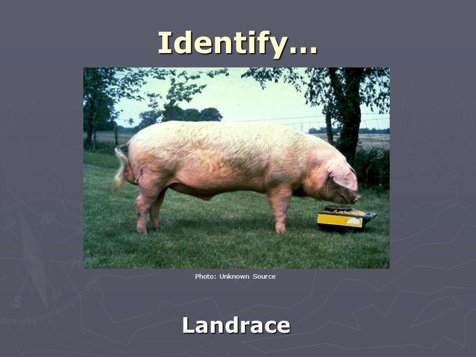 Identify… Landrace