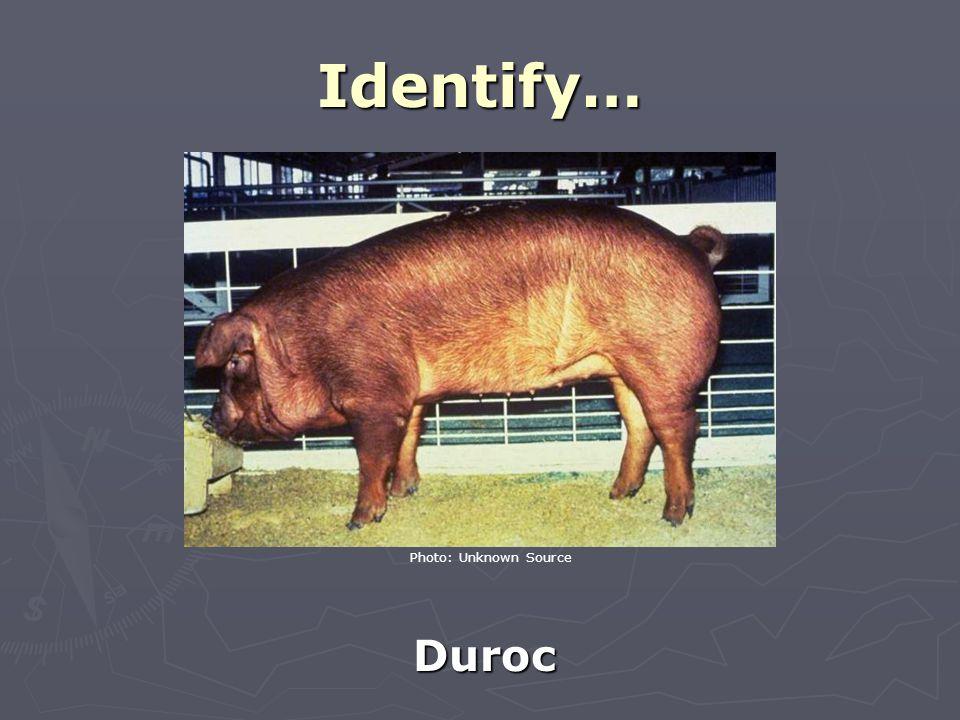 Identify… Duroc