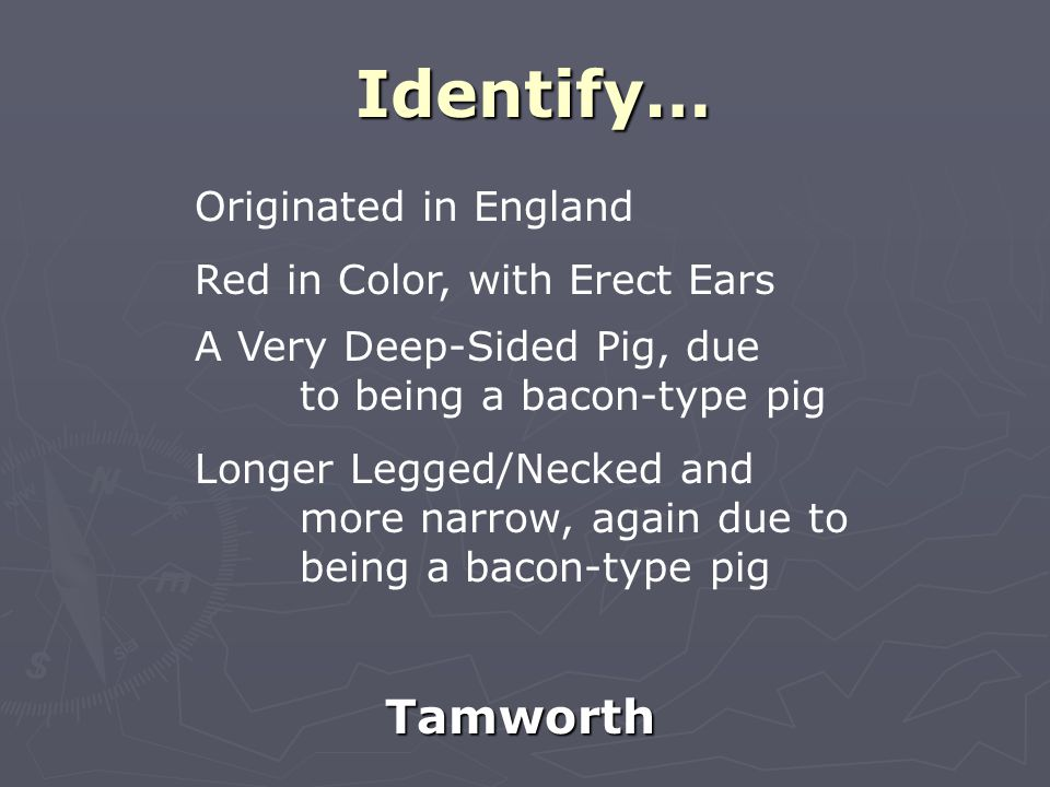 Identify… Tamworth Originated in England Red in Color, with Erect Ears A Very Deep-Sided Pig, due to being a bacon-type pig Longer Legged/Necked and more narrow, again due to being a bacon-type pig