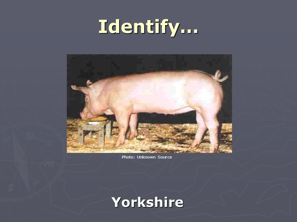 Identify… Yorkshire Photo: Unknown Source