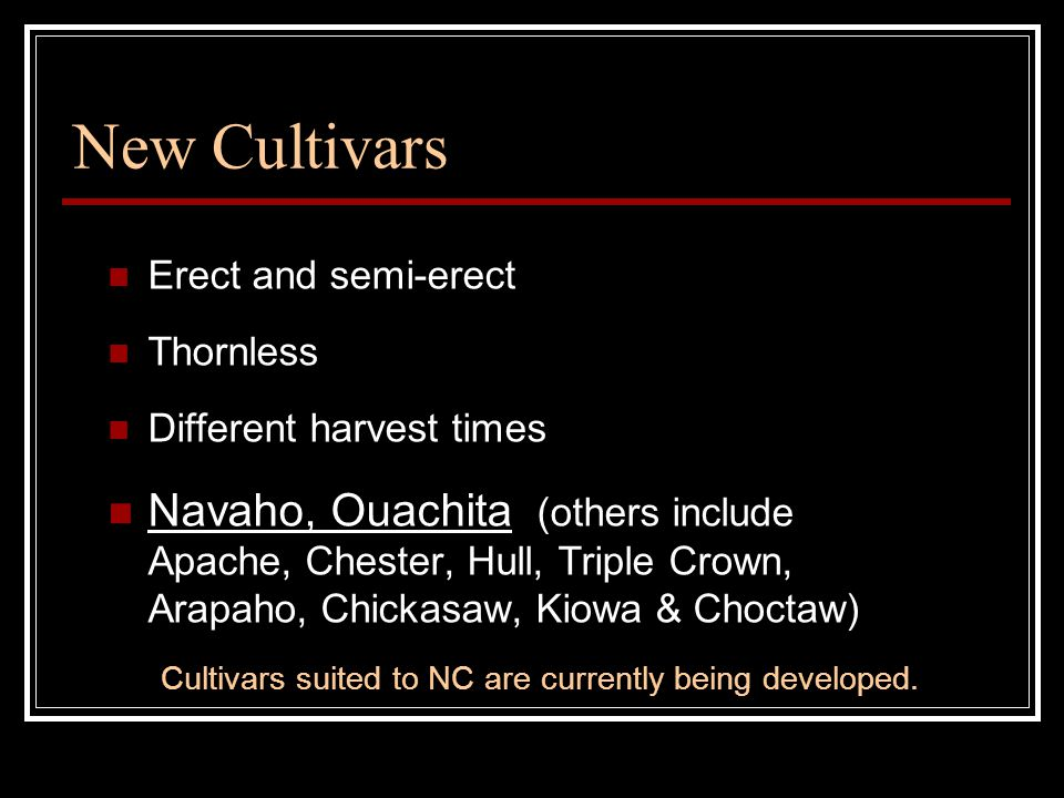 New Cultivars Erect and semi-erect Thornless Different harvest times Navaho, Ouachita (others include Apache, Chester, Hull, Triple Crown, Arapaho, Chickasaw, Kiowa & Choctaw) Cultivars suited to NC are currently being developed.