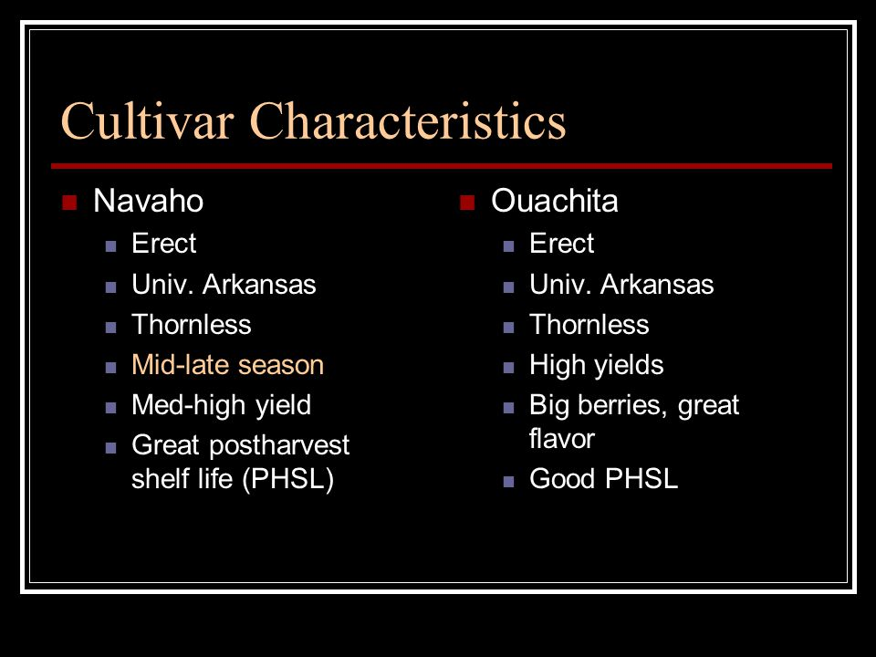 Cultivar Characteristics Navaho Erect Univ.