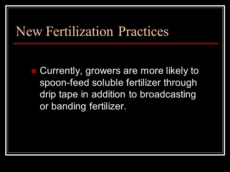 New Fertilization Practices Currently, growers are more likely to spoon-feed soluble fertilizer through drip tape in addition to broadcasting or banding fertilizer.