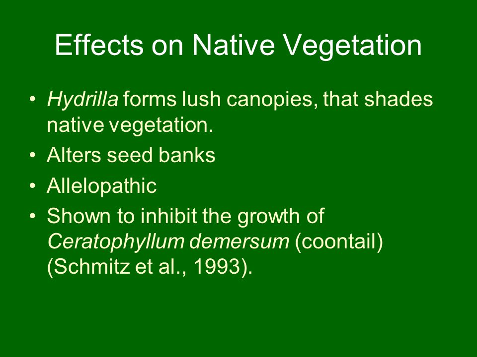 Effects on Native Vegetation Hydrilla forms lush canopies, that shades native vegetation. Alters seed banks Allelopathic Shown to inhibit the growth o