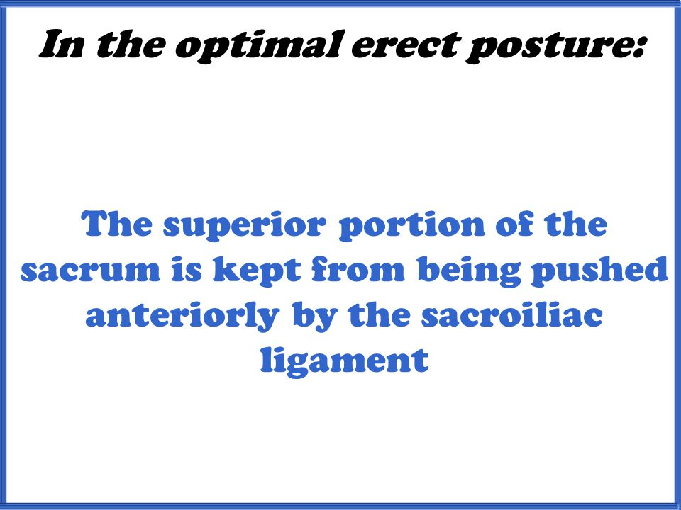 In the optimal erect posture: The superior portion of the sacrum is kept from being pushed anteriorly by the sacroiliac ligament