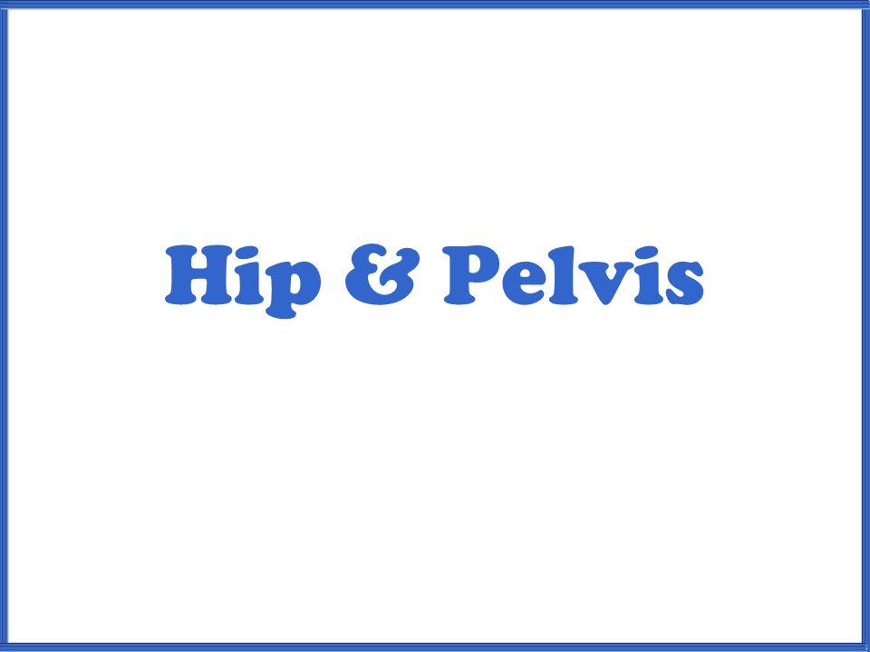 Hip & Pelvis