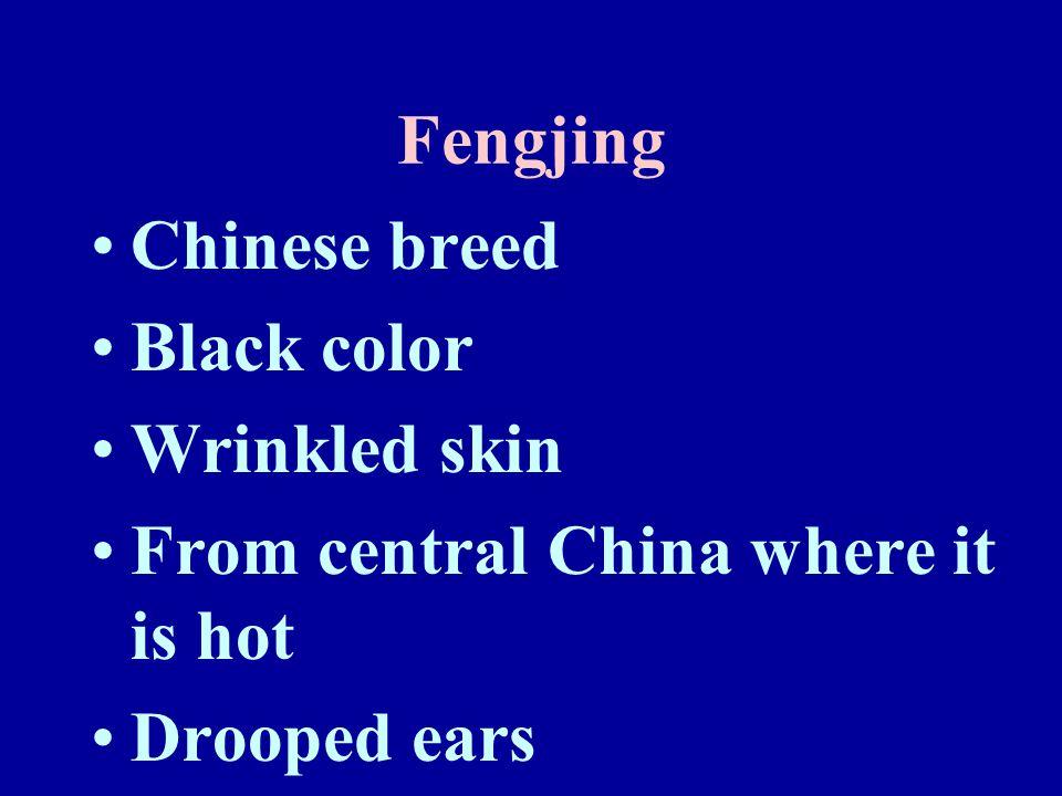 Fenjing