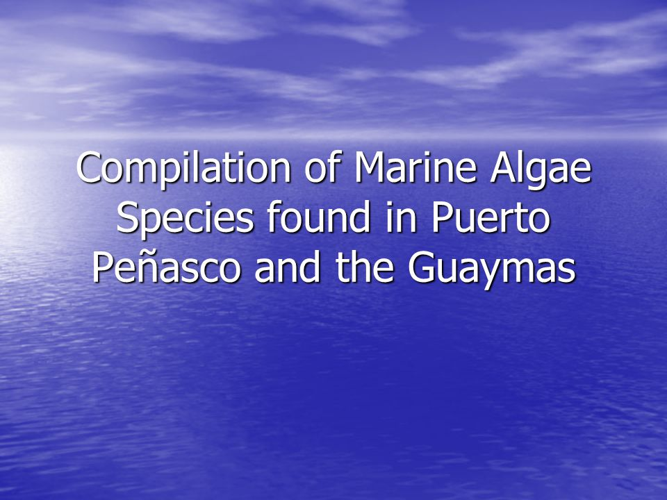 Compilation of Marine Algae Species found in Puerto Peñasco and the Guaymas