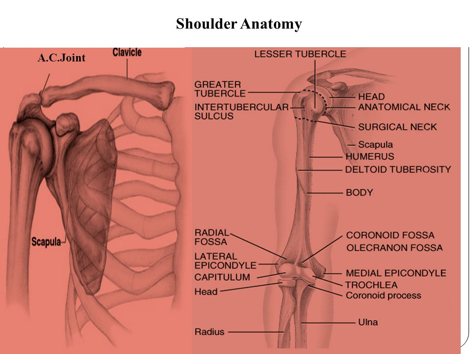 Shoulder joint BASICSPECIAL AP Shoulder External Rotation Non trauma Inferosuperior Shoulder (Axial) Lawrence Method NON trauma AP Shoulder: Internal