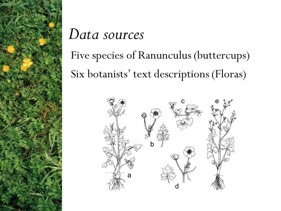 MultiFlora II: Combining Information Extraction and Knowledge Representation for Biodiversity Informatics Department of Computer Science, University of Manchester Mary McGee Wood Susannah Lydon Alan Rector Department of Botany, Natural History Museum, London Rob Huxley Natural Language Processing Group, University of Sheffield Hamish Cunningham Valentin Tablan Diana Maynard Supported by the BBSRC Bioinformatics and E-science Programme, grant reference number 34/BEP17049