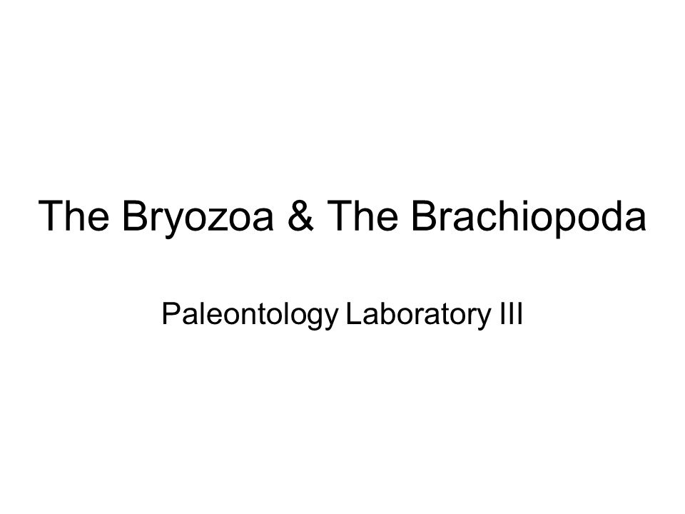 Paleoecology All brachiopods are filter feeding, sessile (non- mobile) bottom dwellers.