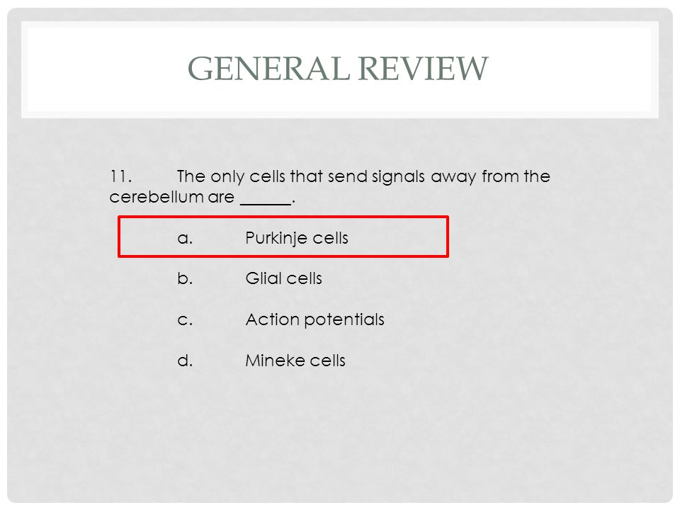 11.The only cells that send signals away from the cerebellum are ______. a.Purkinje cells b.Glial cells c.Action potentials d.Mineke cells GENERAL REV