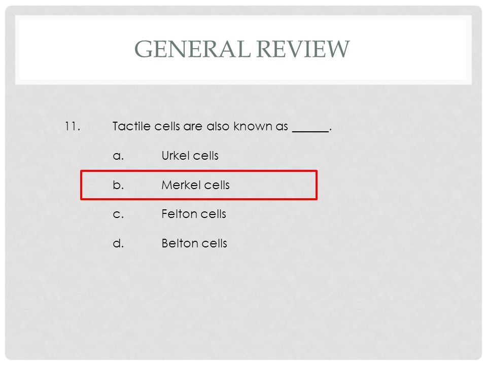 11.Tactile cells are also known as ______. a.Urkel cells b.Merkel cells c.Felton cells d.Belton cells GENERAL REVIEW