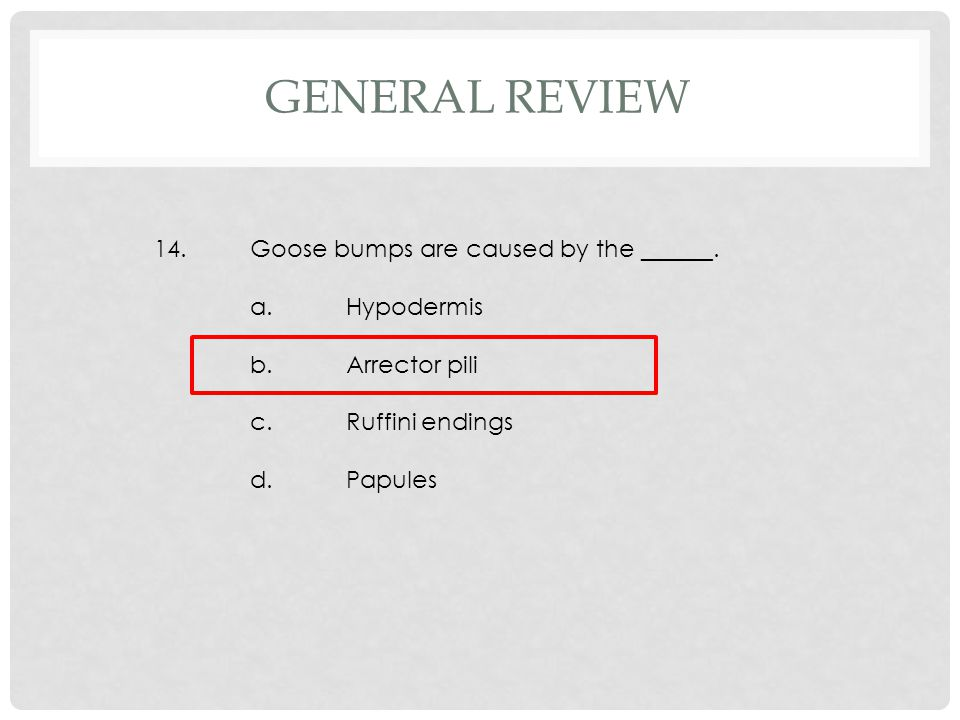 14.Goose bumps are caused by the ______. a.Hypodermis b.Arrector pili c.Ruffini endings d.Papules GENERAL REVIEW