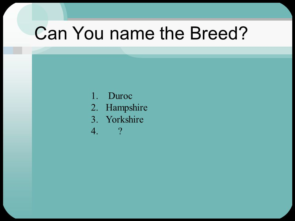 Can You name the Breed 1. Duroc 2.Hampshire 3.Yorkshire 4.