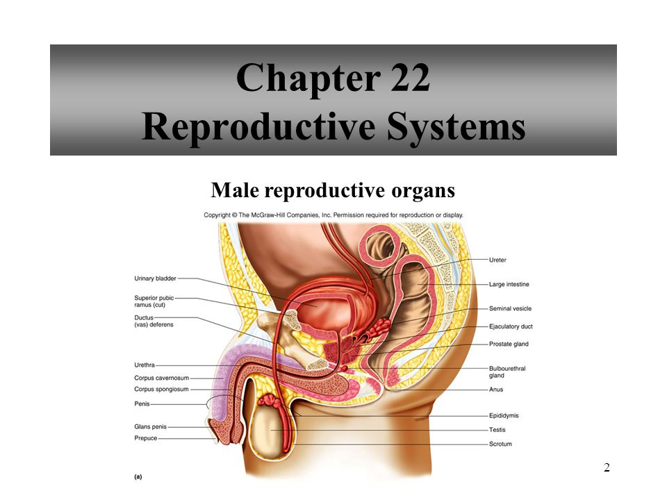 53 Female Reproductive Cycle