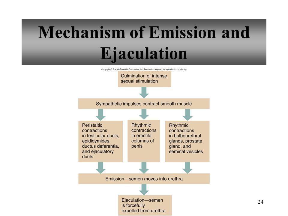 24 Mechanism of Emission and Ejaculation