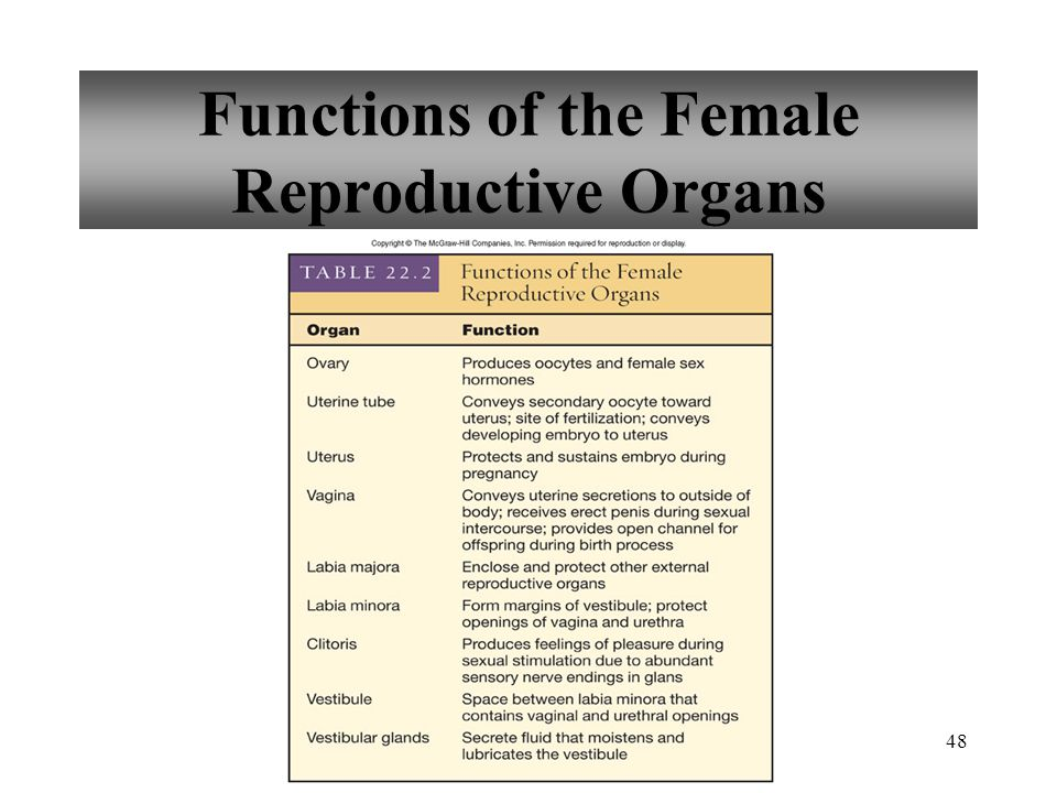 48 Functions of the Female Reproductive Organs