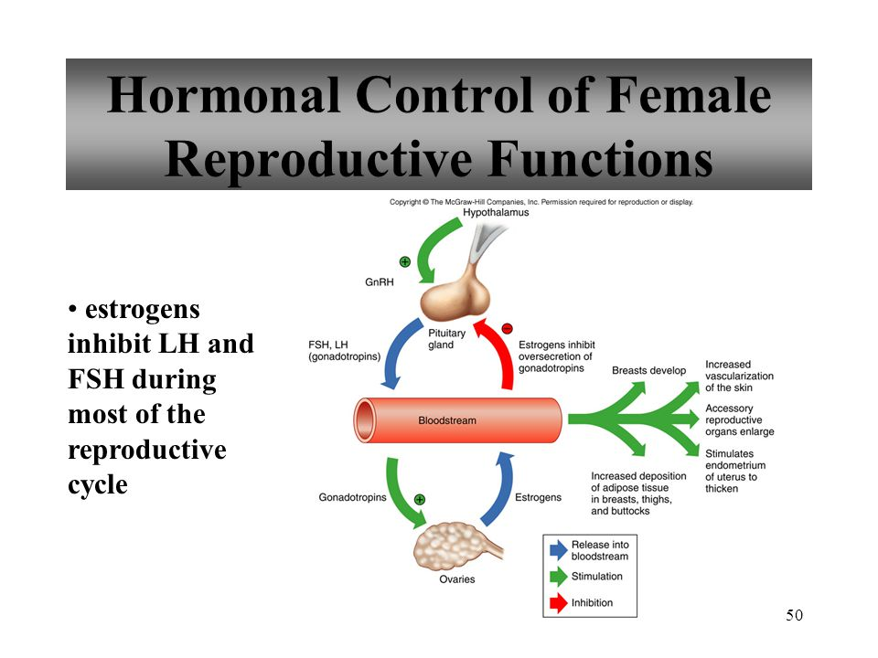 50 Hormonal Control of Female Reproductive Functions estrogens inhibit LH and FSH during most of the reproductive cycle