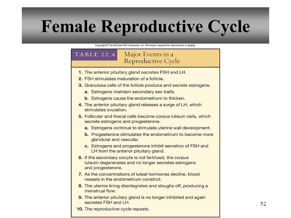 52 Female Reproductive Cycle