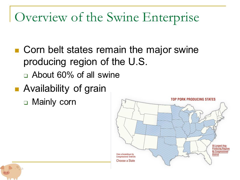 Overview of the Swine Enterprise Corn belt states remain the major swine producing region of the U.S.  About 60% of all swine Availability of grain 