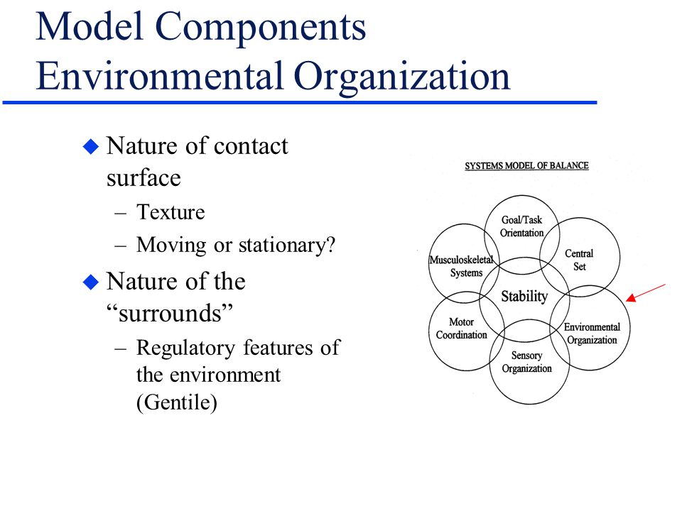 "Model Components Environmental Organization u Nature of contact surface –Texture –Moving or stationary? u Nature of the ""surrounds"" –Regulatory featur"