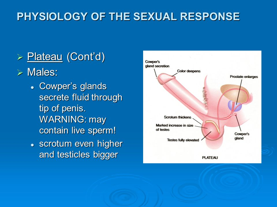 PHYSIOLOGY OF THE SEXUAL RESPONSE  Orgasmic: Males: Two stages: Males: Two stages: contraction of seminal vesicles, vas and prostatecontraction of seminal vesicles, vas and prostate contraction of urethra and penis: ejaculationcontraction of urethra and penis: ejaculation